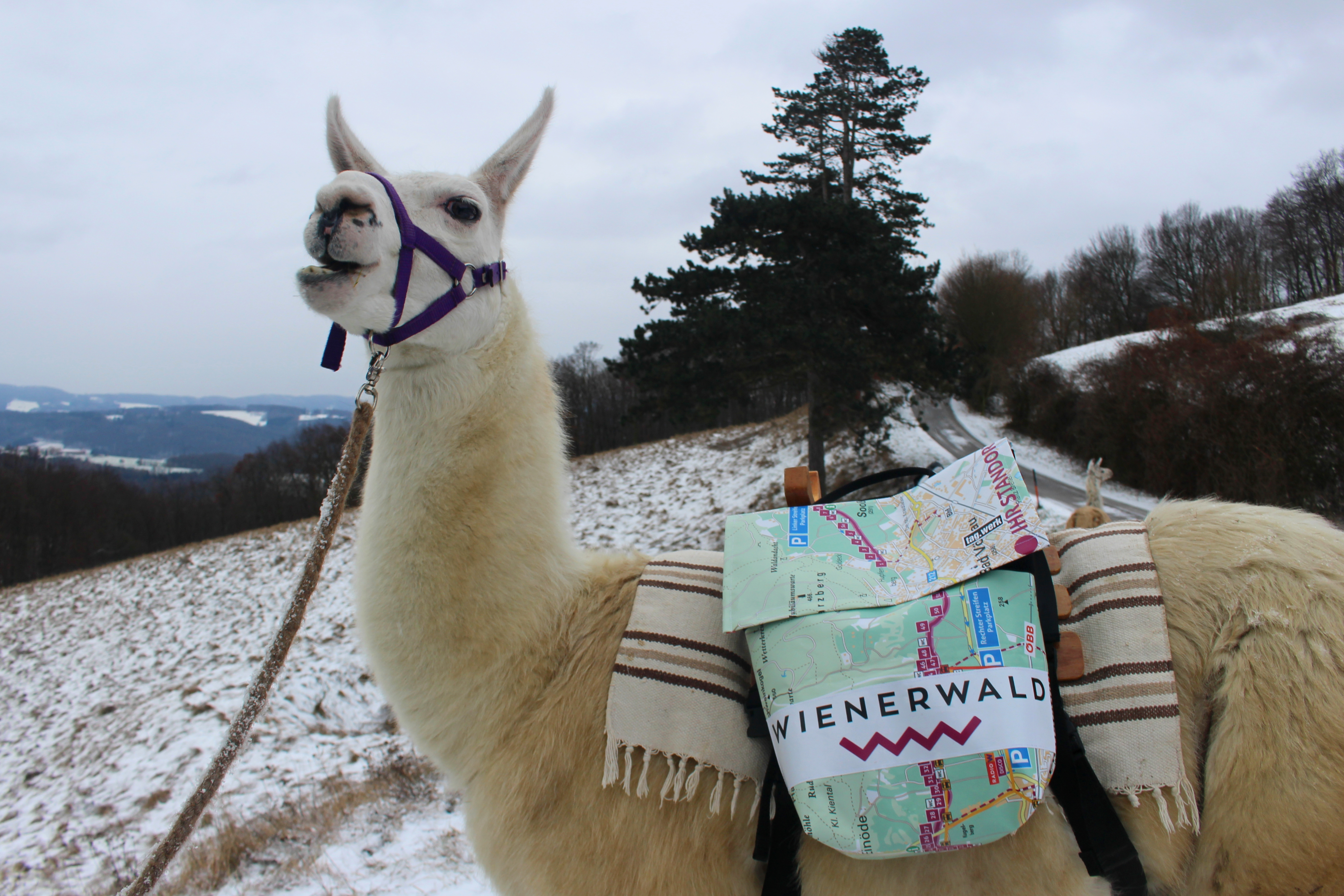 Blogartikel zu Wienerwald - carolinavolksfolks.com